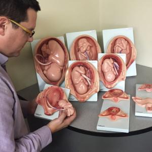Kit de Desarrollo Fetal
