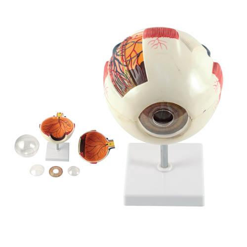 Modelo de Anatomía Ocular